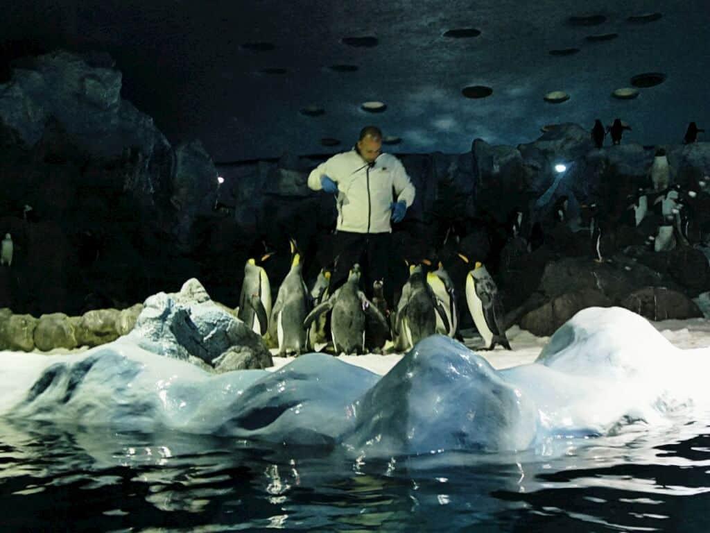 Planet Pinguin
