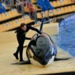 Orca im Loro Park