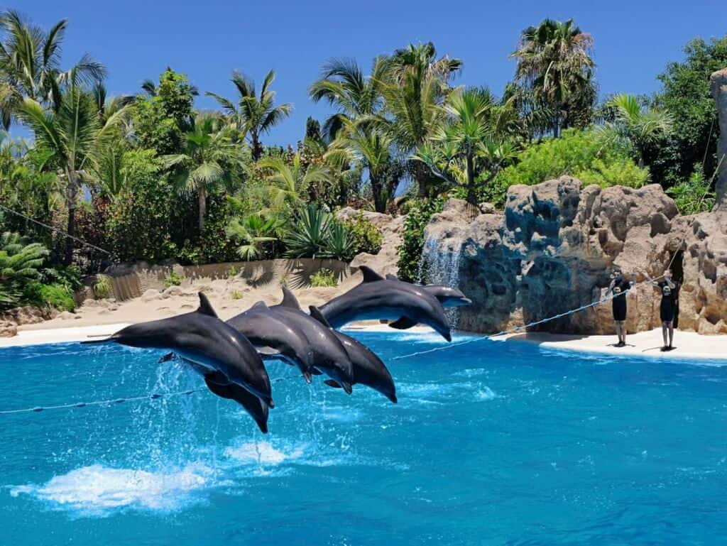 Delphinshow Loro Park