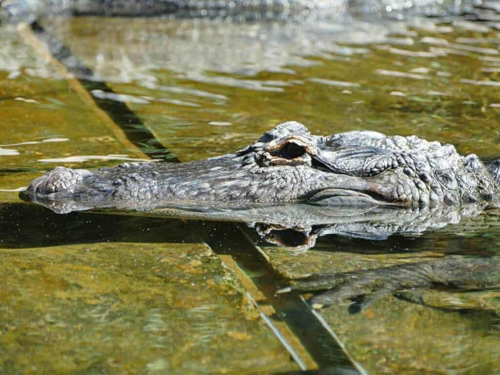 Reptilien Loro Park