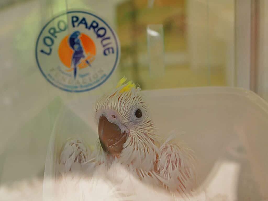 Tierschutz Arterhaltung Loro Park